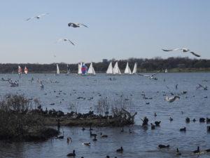 Photo from White-Rock-Lake.blogspot.com